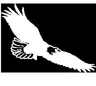 white eagle mascot